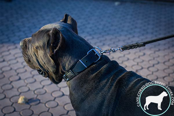 Cane Corso black leather collar with strong hardware for safe walking