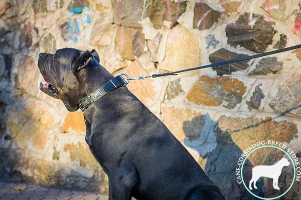 Cane Corso black leather collar with duly riveted fittings for walking