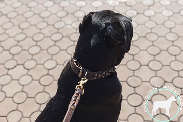 Cane Corso brown leather collar with durable hardware for quality control