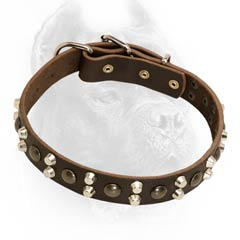 Leather dog collar with spikes and studs