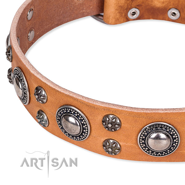Everyday use full grain leather collar with rust resistant buckle and D-ring