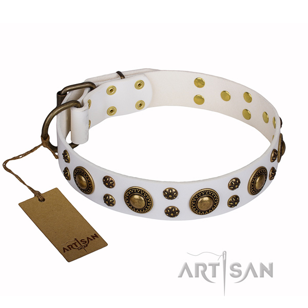 Daily use full grain leather collar with embellishments for your dog