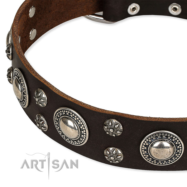 Quick to fasten leather dog collar with extra strong non-rusting fittings