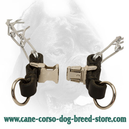 Quick Release Buckle on Chrome Plated Cane Corso Pinch Collar