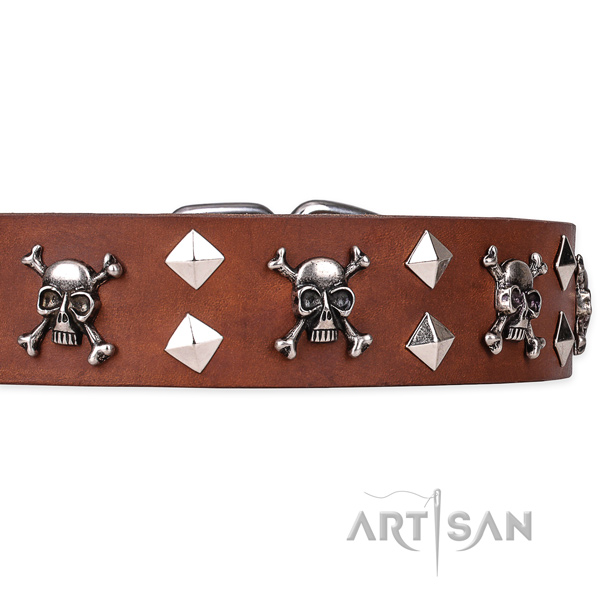 Everyday leather dog collar with amazing embellishments