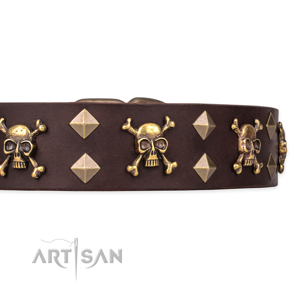 Daily leather dog collar for stylish walking