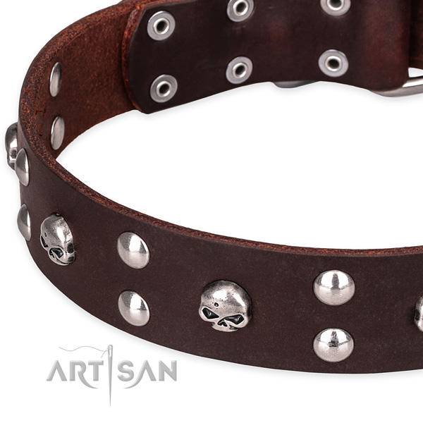 Casual leather dog collar with astounding decorations