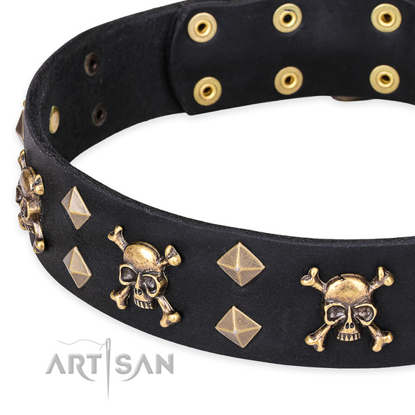 Casual style leather dog collar with fashionable embellishments