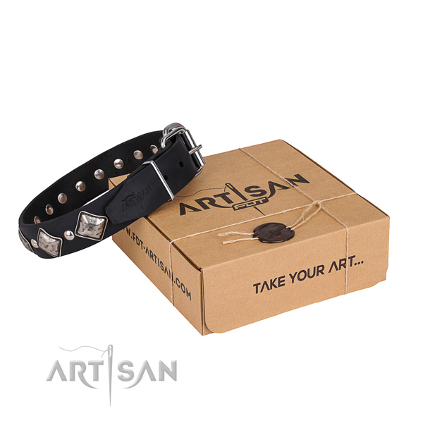 Casual leather dog collar with astounding adornments