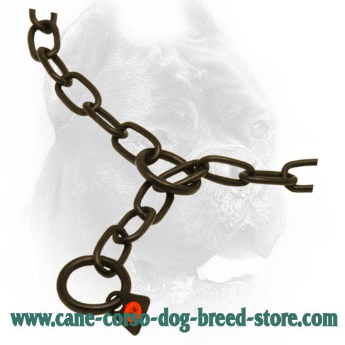O-Ring on Black Cane Corso Fur Saver