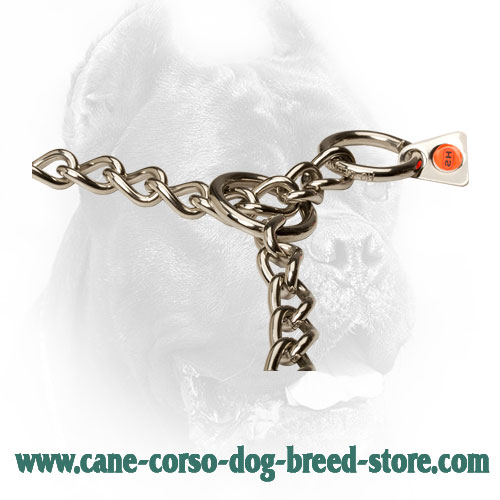 Durable O-Rings on Cane Corso Choke Collar