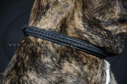 Cane Corso Braided Dog Collar for Pleasant Walking