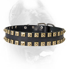 Walking leather dog collar with brass studs