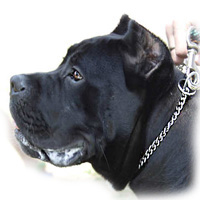 Dog training choke collars or slip collar