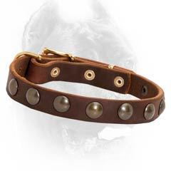 Fashion brown leather Cane Corso collar studded