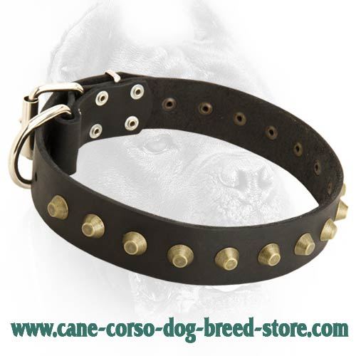 Best Collar Color For Tan Dog