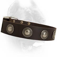 Universal leather dog collar
