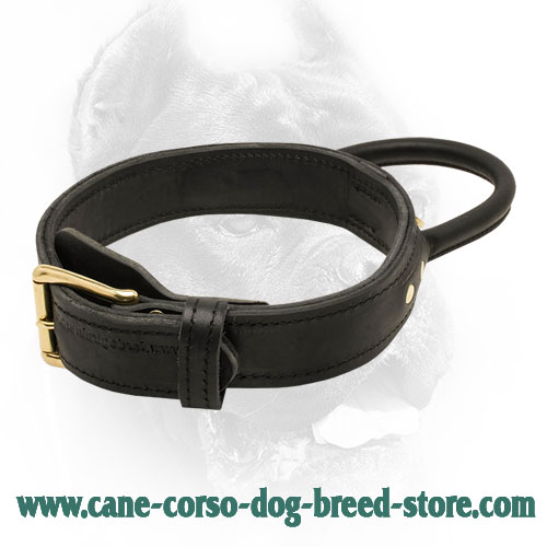 best collar with handle