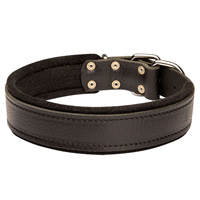 Leather dog collar padded with thick felt - our best collar