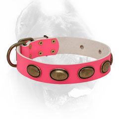 Pink leather Cane Corso collar with ovals