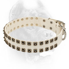 White leather Cane Corso collar with studs