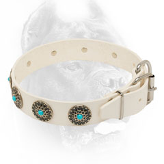 Conchos adorned white leather dog collar for walking