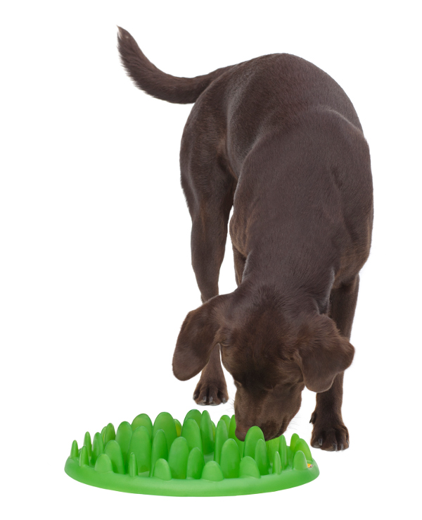 Pet Feeder Green Eco-Friendly Makes Dog Food More Tasty