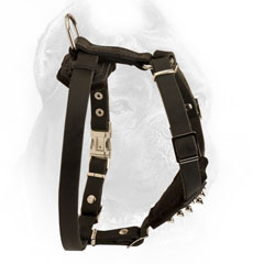 Cane Corso Harness with Padded Chest and Straps