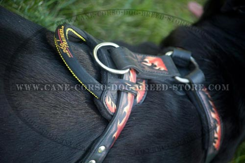 Exclusive Cane Corso Harness Padded On The Chest