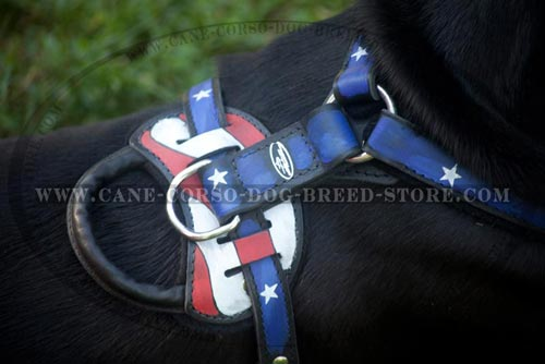 Exclusive Cane Corso Harness With Padding