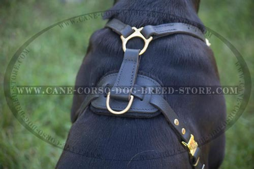 Amazing Cane Corso Leather Harness
