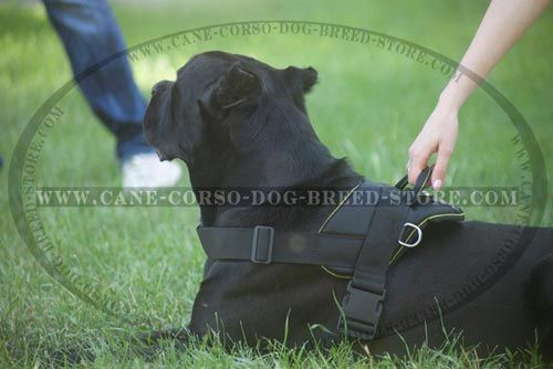 Comfortable Nylon Dog Harness