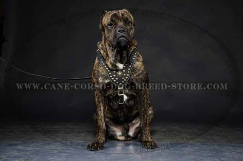 Hand Crafted Dog Leather Harness Is A Regal Harness