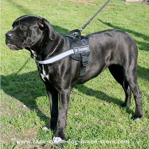 multifunctional nylon cane corso harness h6p 1030 best nylon