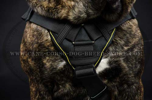 Designer Cane Corso Harness For Safety And Comfort