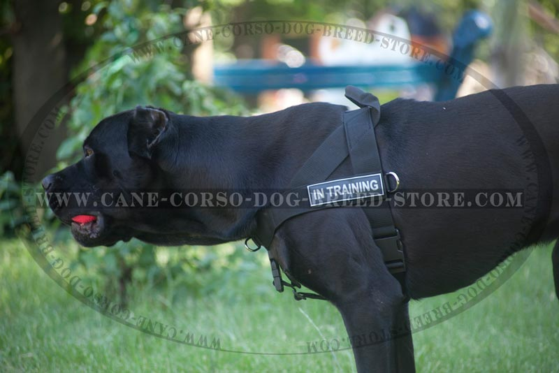 SAR Lightweight Nylon Cane Corso Harness for Working Dogs [H17##1030