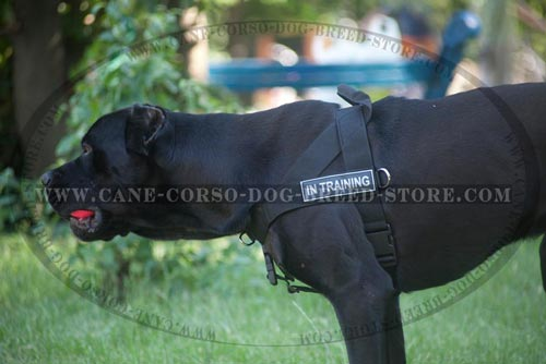 Training Nylon Cane Corso Harness