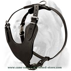 Padded versatile designer leather harness