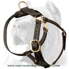 Handworked exclusive leather harness