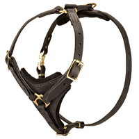 Leather Harnesses Cane Corso