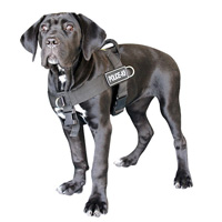 Search Rescue NYLON Cane Corso HARNESS