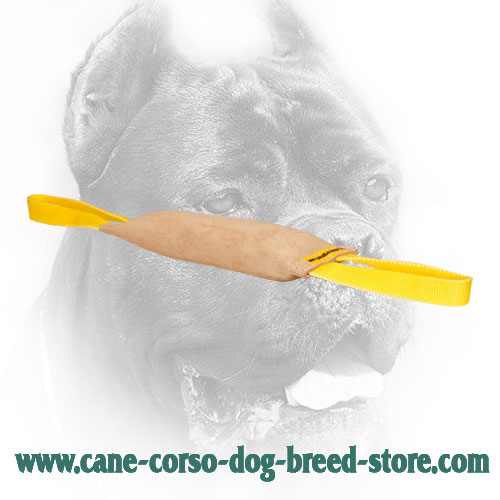 Leather Cane Corso Bite Tug with Nylon Handles