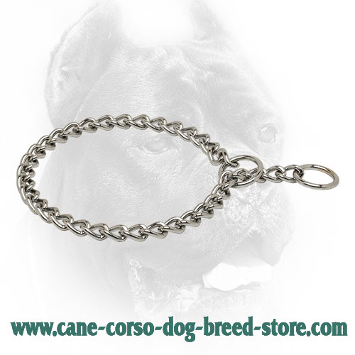 Chrome Plated Choke Collar Cane Corso for Obedience Training