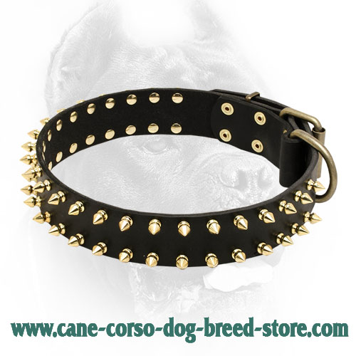 Shiny Leather Cane Corso Collar with 2 Rows of Brass Spikes