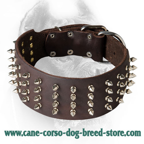 3 Inch Leather Cane Corso Collar with 4 Rows of Spikes