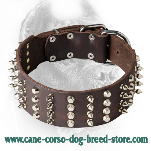 2 Inch Leather Cane Corso Collar with Studs and Spikes