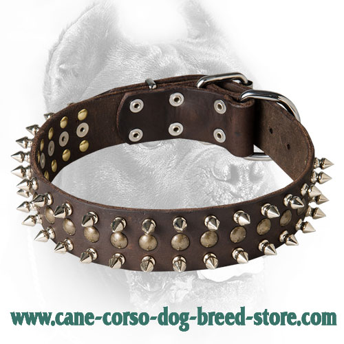 War Design Leather Cane Corso Collar with Spikes and Half-Ball Studs