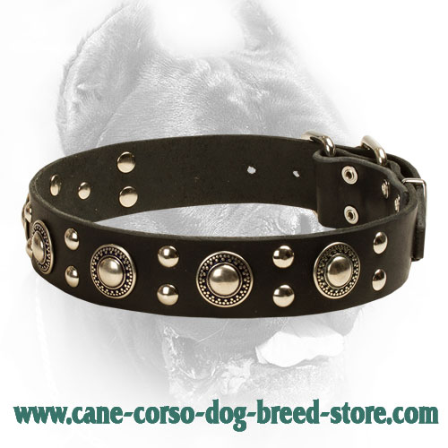 Fancy Design Studded Leather Cane Corso Collar