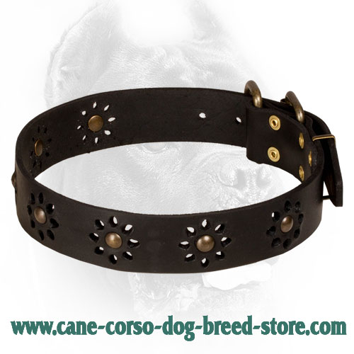 Leather Cane Corso Collar with Flower Decor