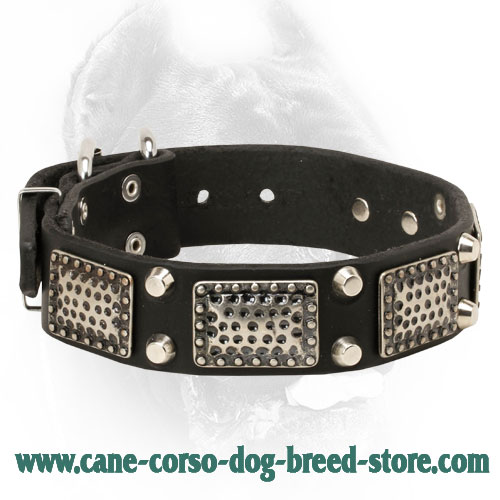 Gorgeous Leather Cane Corso Collar with Vintage Plates and Studs